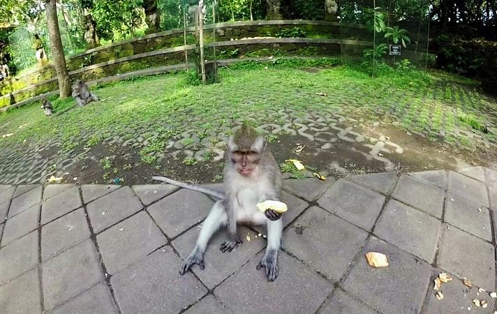 Affe mit einer Banane