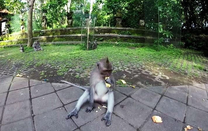 Affe ist Banane