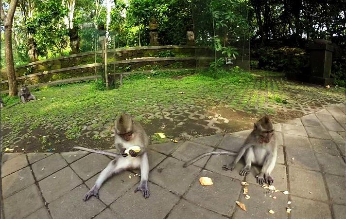 Zwei Affen essen Bananen