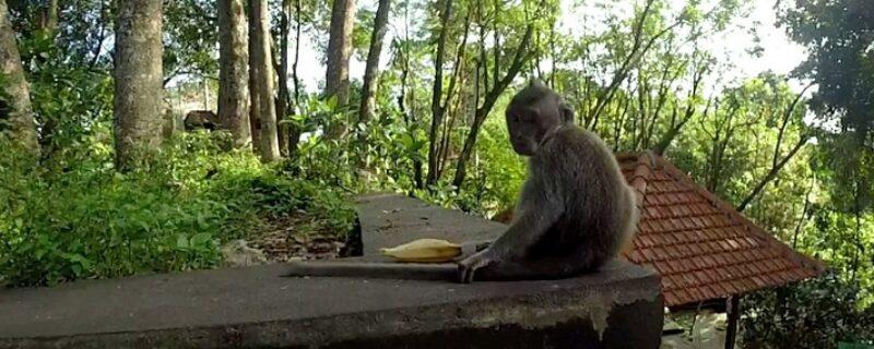 Baby Affe mit Banane