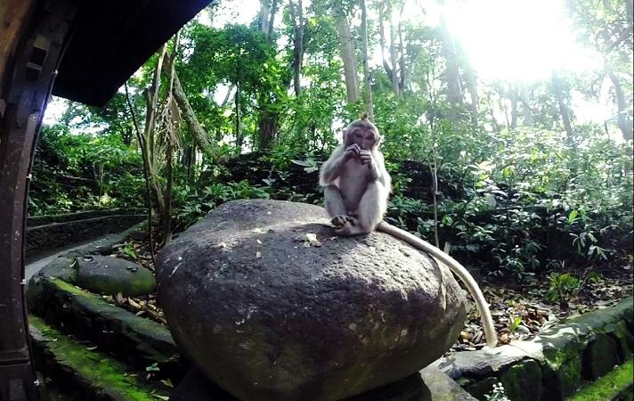 Baby Affe auf Stein