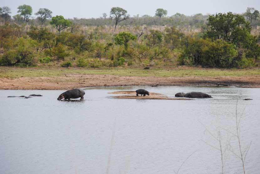 Suedafrika Krueger National Park Hippos