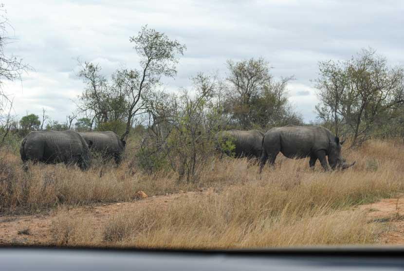Suedafrika Krueger National Park Nashorn