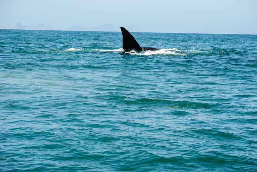 Suedafrika Kapstadt Whale Watching