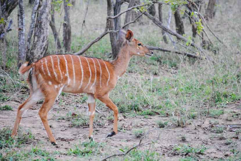 Suedafrika Krueger National Park