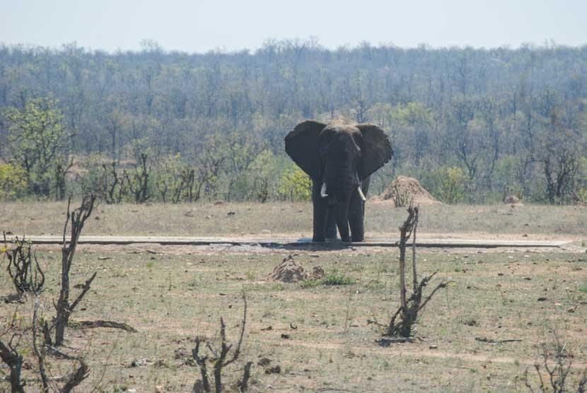 Suedafrika Krueger National Park Elefant