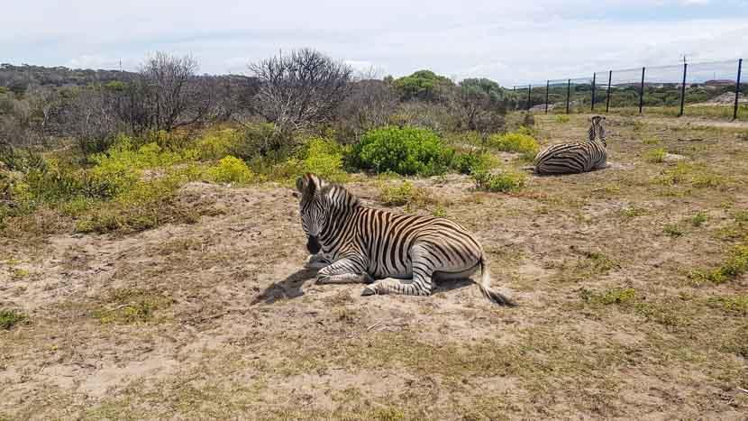 Unsere erste Zebra Sichtung