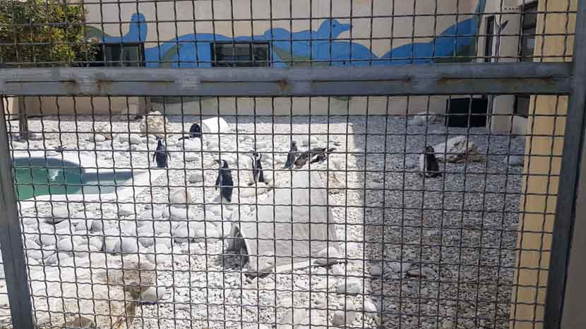 Pinguine in der Auffangstation