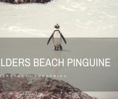 Boulders Beach Pinguine