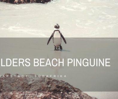 Boulders Beach Pinguine