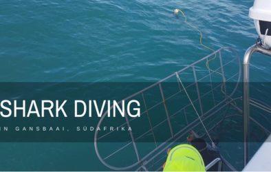 Shark Diving Gansbaai suedafrika