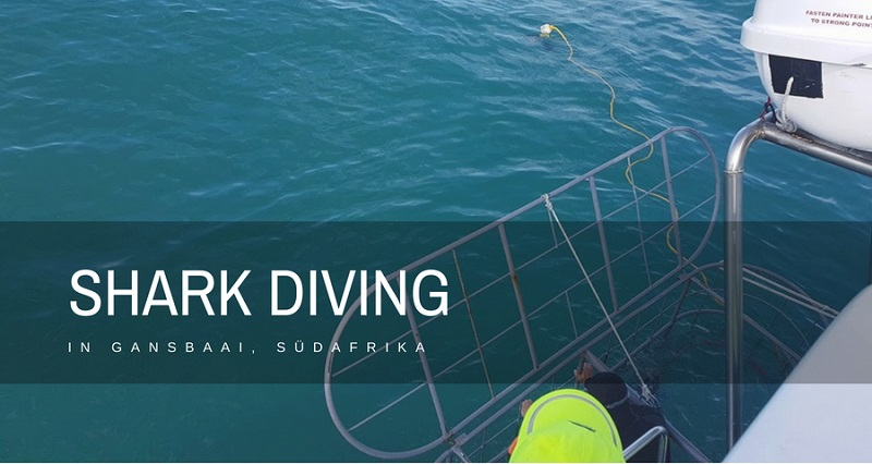 Shark Diving Gansbaai suedafrika