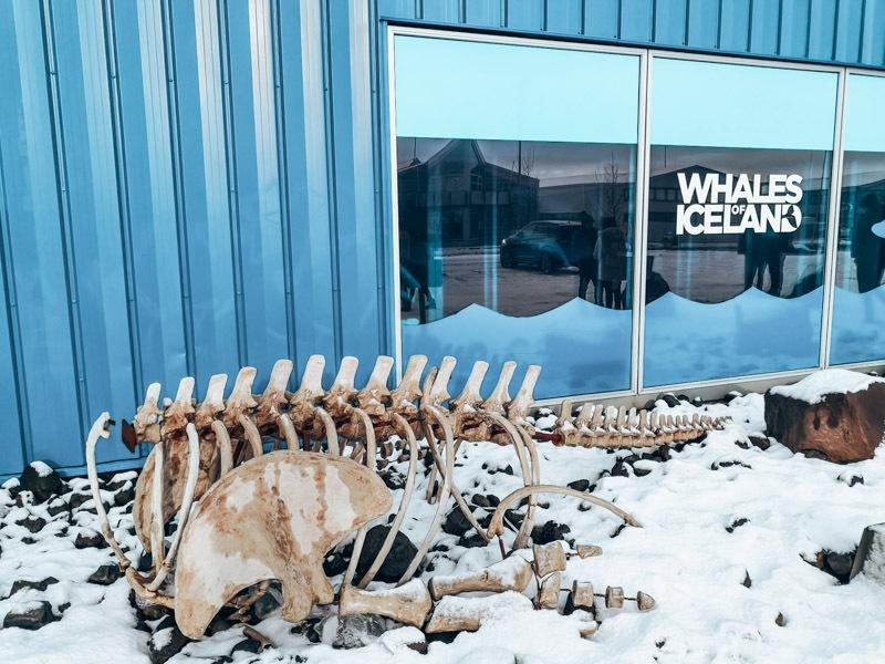 Reykjavik Wal Museum